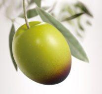 Los secretos de salud que guarda el aceite de oliva