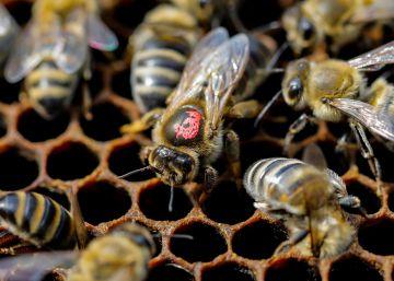 8.000 toneladas de miel para endulzar el mundo desde Salamanca